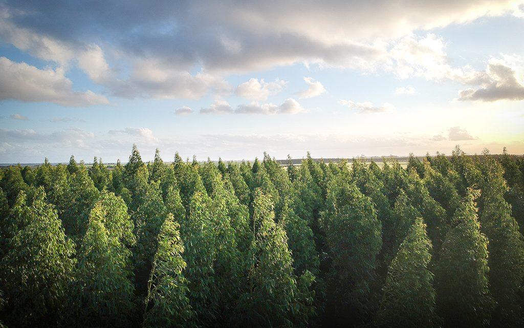 Ormansızlaşma, Doğal Yaşam Alan Tahribi ve Koronavirüs Krizi